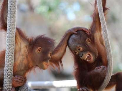 Der Affe im chinesischen Horoskop < Foto: (c) LifeGemz - stock.adobe.com
