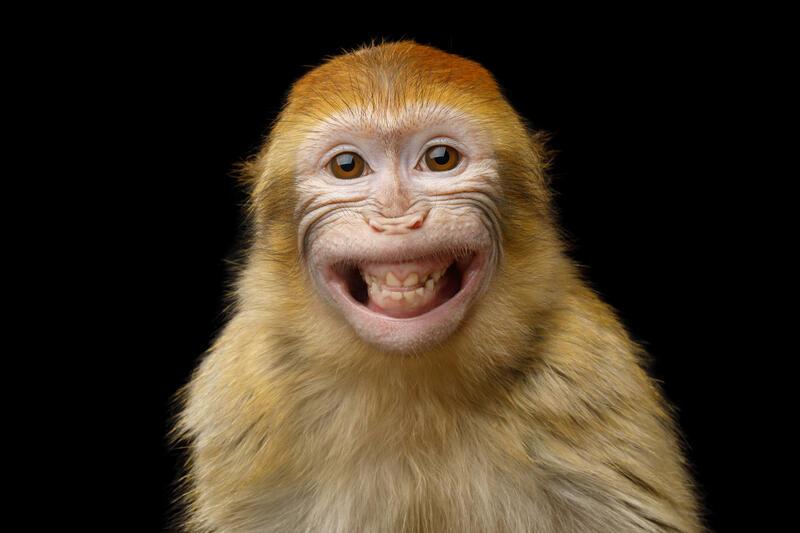 Chinese Horoscope - Fire - Monkey | photo: (c) seregraff - stock.adobe.com