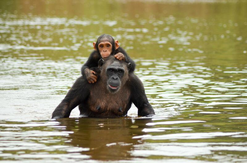 Chinese Horoscope - Water - Monkey | photo: (c) ccile - stock.adobe.com