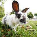 Chinese animal zodiac sign Rabbit | Photo: © SQUAMISH - istockphoto.com
