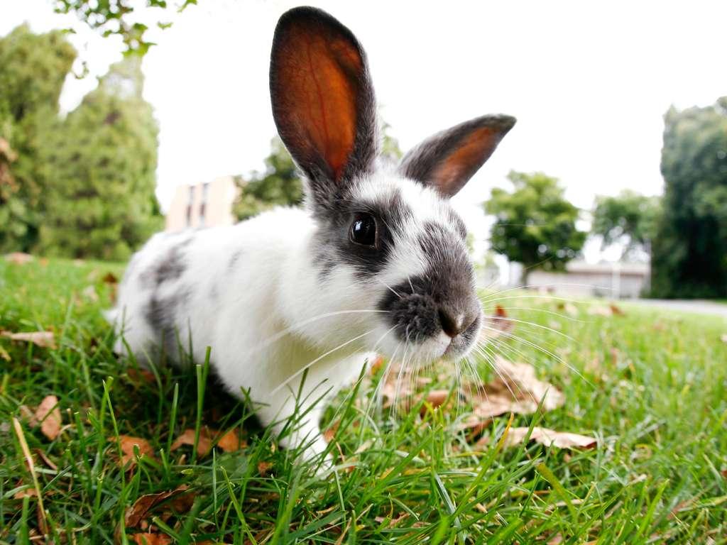 Chinese animal zodiac sign Rabbit | Photo: © SQUAMISH - istockphoto.com