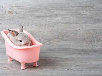 Der Wasser - Hase im chinesischen Horoskop | Foto: (c) Thirawatana - stock.adobe.com