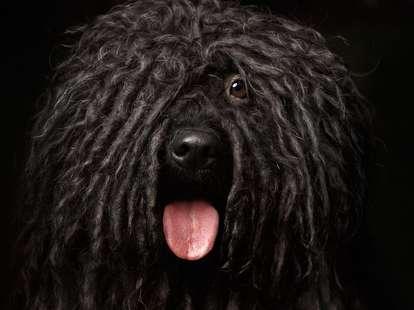 Der Hund im chinesischen Horoskop | Foto: (c) seregraff - stock.adobe.com