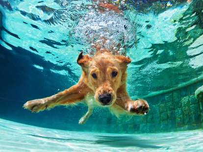 Chinese Horoscope - Water - Dog | photo: (c) Tropical studio - stock.adobe.com