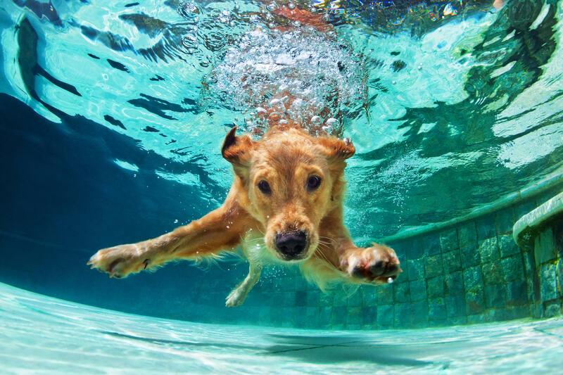 Chinese Horoscope - Water - Dog   photo: (c) Tropical studio - stock.adobe.com