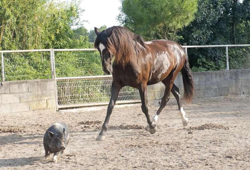 Jahr des Schweins 2019  Foto: (c) cynoclub - stock.adobe.com