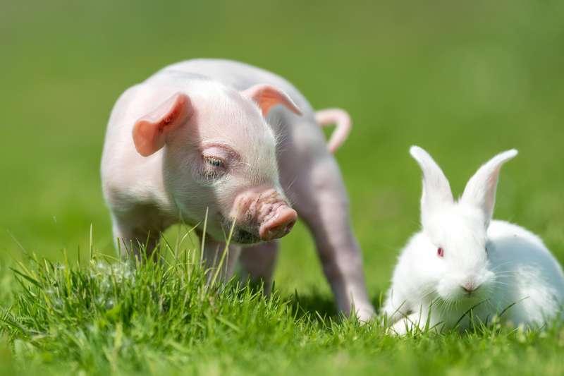Jahr des Schweins 2019 | Foto: (c) byrdyak - fotolia.com