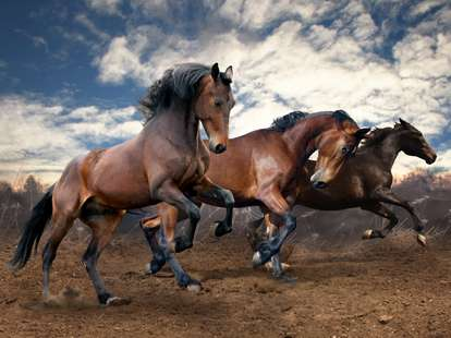 Das Pferd im chinesischen Horoskop < Foto: (c) SashaS - stock.adobe.com