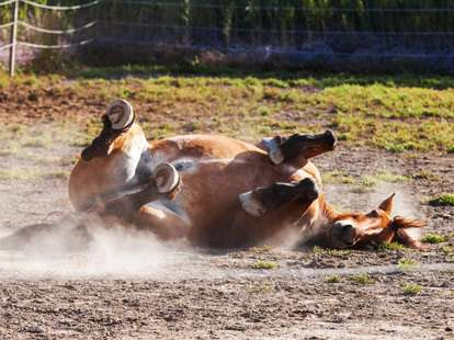 Chinese Horoscope - Earth - Horse | photo: (c) catalyseur7 - stock.adobe.com