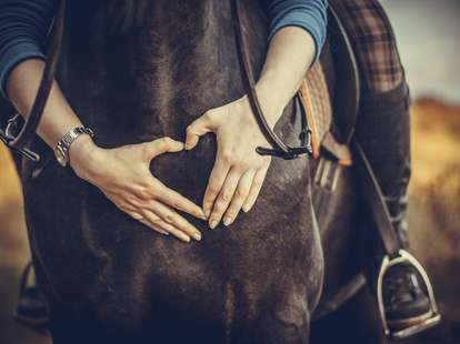 Chinese Horoscope - Wood - Horse | photo: (c) Александра Печорина - stock.adobe.com