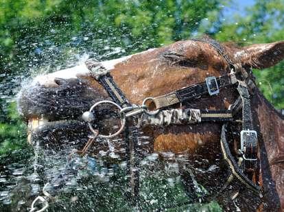 Das Wasser - Pferd im chinesischen Horoskop | Foto: (c) beerfan - stock.adobe.com