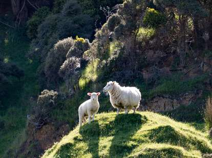 Das Metall - Schaf im chinesischen Horoskop | Foto: (c) Bjoern - stock.adobe.com