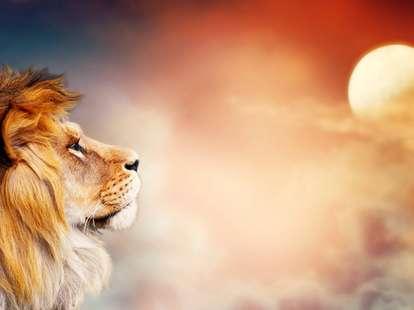 Der Vollmond weckt animalische Kräfte | Foto: © julia_arda - stock.adobe.com