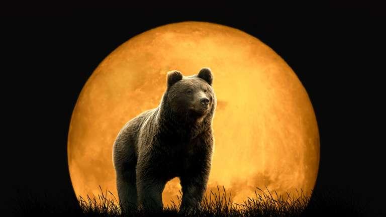 10. Diese Energie kann als sehr intensiv, wild und unzähmbar empfunden werden. | Foto: (c) stock.adobe.com