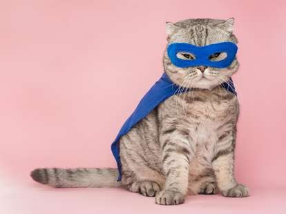 Who knows this superhero? | Photo: (c) Anton - stock.adobe.com