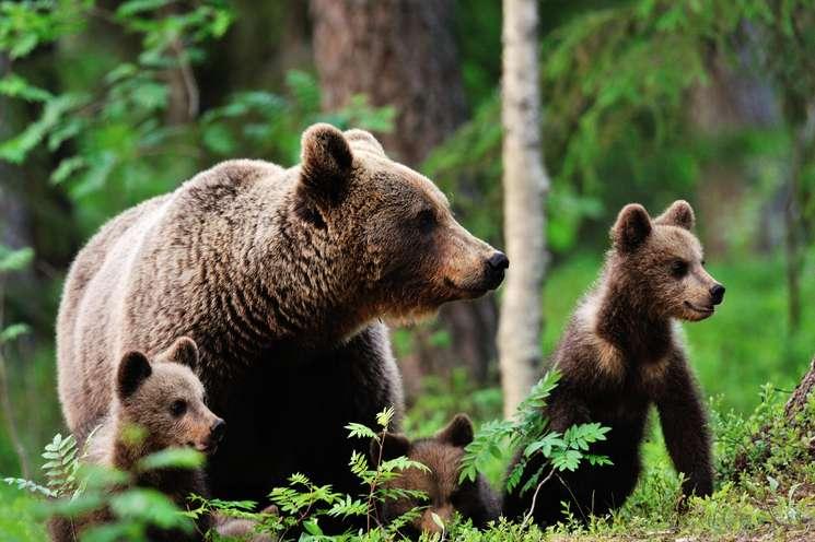 Die Glücksbären der Woche | Foto: (c) Erik Mandre - fotolia.com