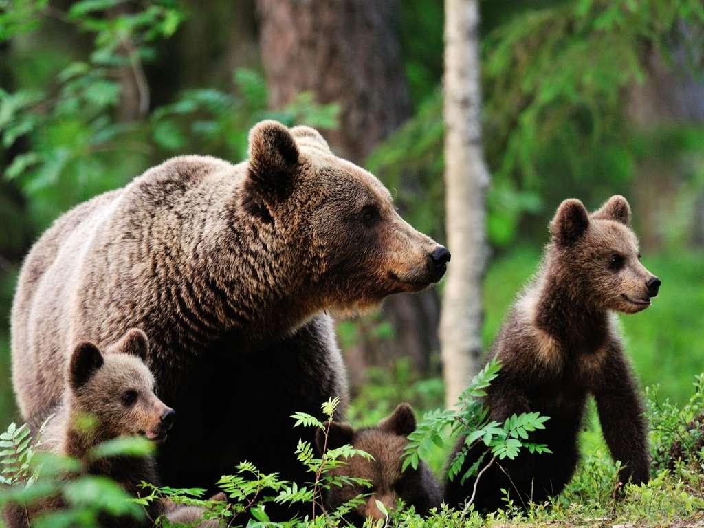 The lucky bears of the week | Photo: Erik Mandre - fotolia.com