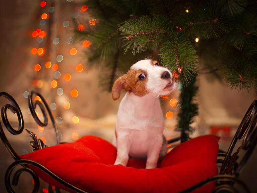 The lucky dog of the week ... | Photo: annaav - fotolia.com