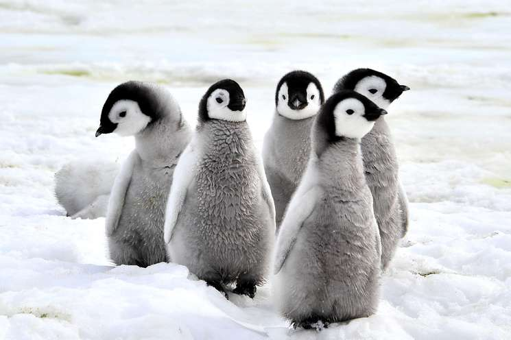 Happy penguins of the week | Photo: (c) Silver - Fotolia.com