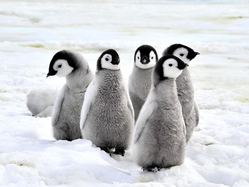 Happy penguins of the week   Photo: (c) Silver - Fotolia.com