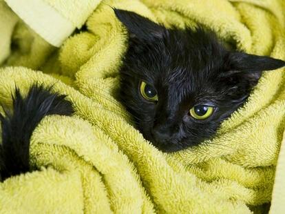 Schwarze Katze   Foto: © kalcutta - Fotolia.com