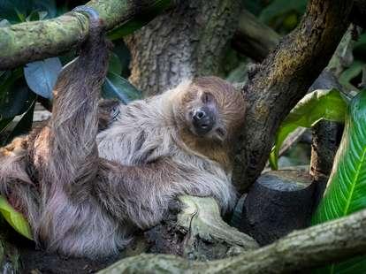Horoskop für Samstag, 21. März - Die magische Tierwelt fasziniert | Foto: © iStockphoto.com/milan noga
