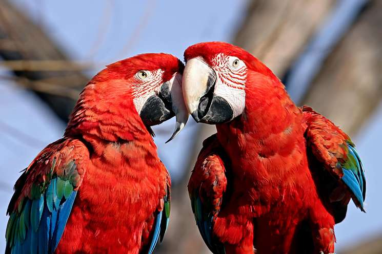 Die Glücksvögel der Woche | Foto: © Ronnie Howard - Fotolia.com