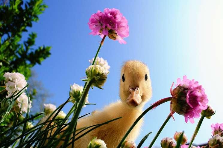 Foto: Tanja Bagusat - Fotolia.com