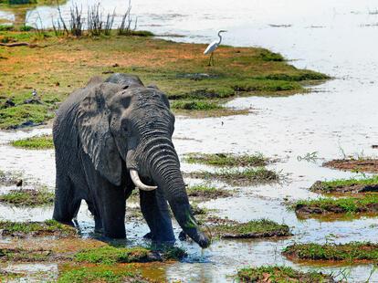 Lucky elephant of the week | Foto: © paula - fotolia.com