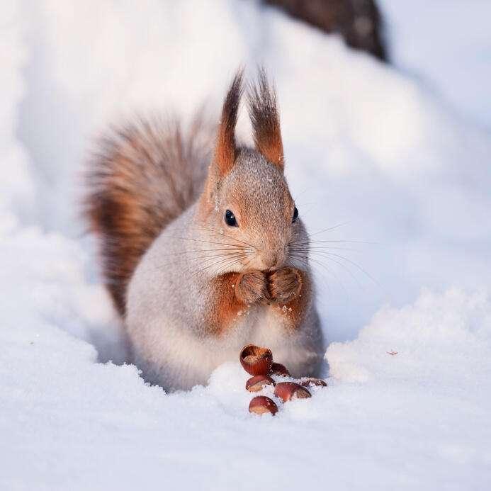 Gehörst Du zu den Glückshörnchen der Woche?