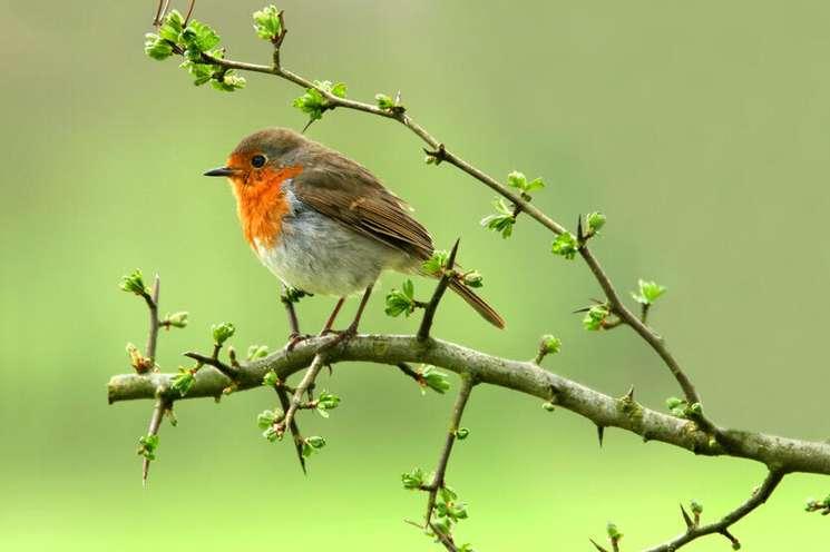 Gehörst Du zu den Glücksvögeln der Woche? Foto: © marilyn barbone - Fotolia.com