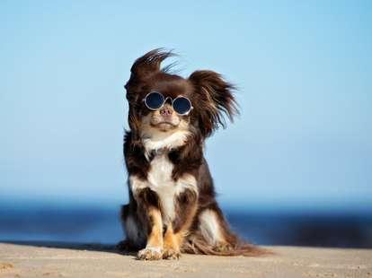 Hund | Foto: otsphoto / shutterstock.com