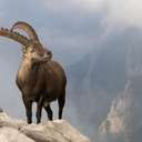 Annual Horoscope 2016 Zodiac Sign Capricorn (c) Stefan Arendt / Fotolia