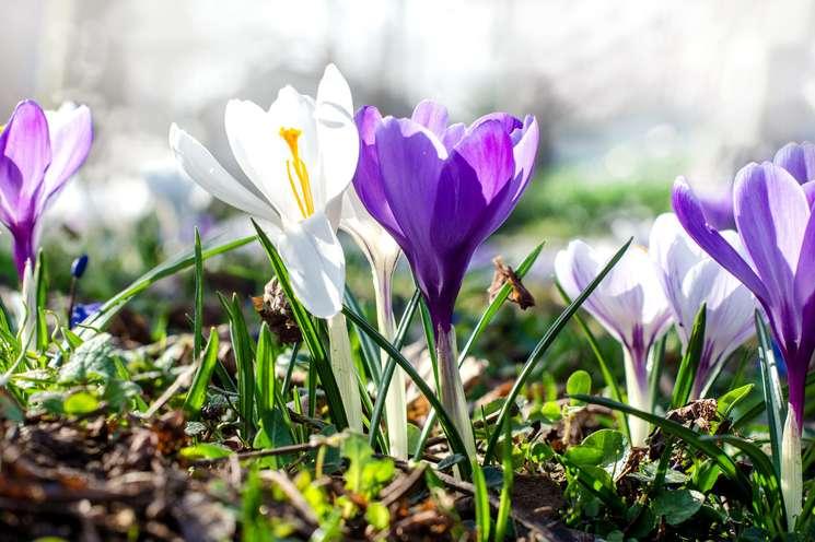 Steinbock März 2018 | | Foto: © doris oberfrank-list - Fotolia.com