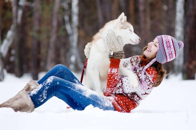 Stier Januar 2018   Foto: © Ermolaev Alexandr - fotolia.com