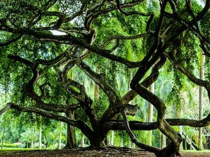 An amazing tree | Photo: Carolin Krug / Photocase.de
