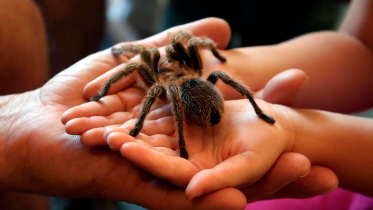 In November Aquarius isn't scared of spiders anymore. | Foto: © iStockphoto.com/tiburonstudios