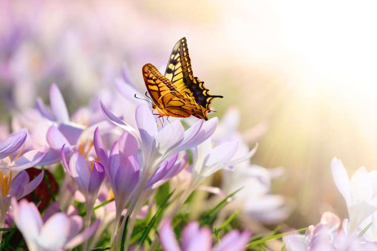 Daily horoscope May 15th 2018 | Photo: (c) Thaut Images - fotolia.com