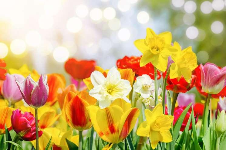 Daily horoscope April 6th 2019 | Photo: © jozsitoeroe - stock.adobe.com