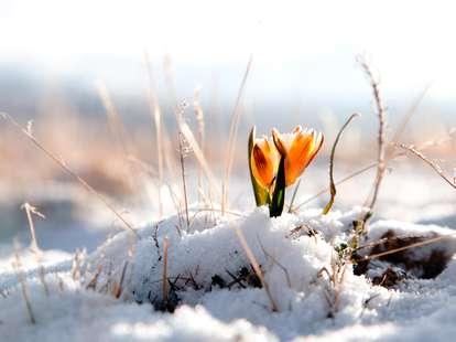 daily horoscope March 1st 2020 | Photo: © Elena Moiseeva  - stock.adobe.com