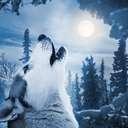 Daily horoscope 12th december 2019 | photo: (c) tarasov_vl  - stock.adobe.com