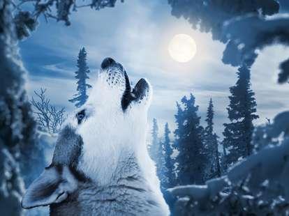 daily horoscope February 9th 2020 | Photo © tarasov_vl - stock.adobe.com