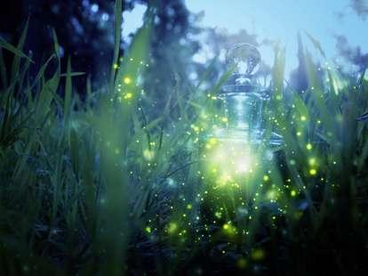 | Photo: © iStockphoto.com/tomertu