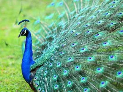 Horoskop für den 3. Juli | Foto: (c) rickyd/Shutterstock.com
