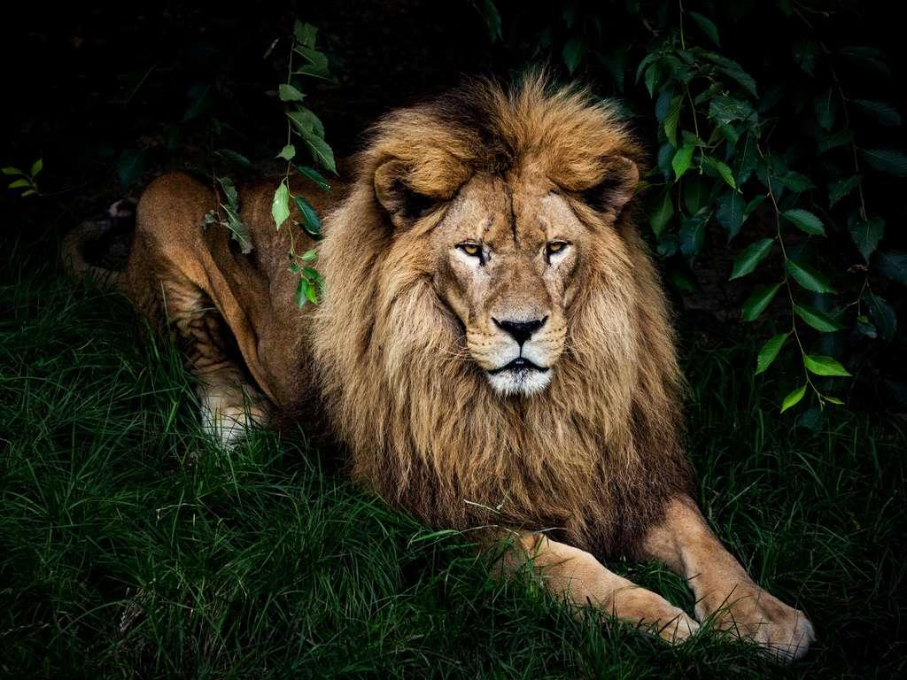 Löwe Horoskop Woche
