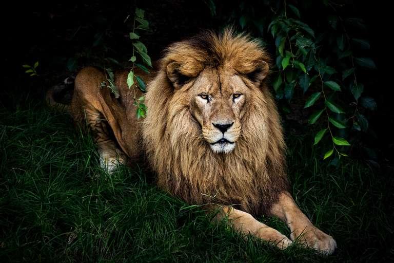 Leo horoscope for week 45 (11/2 - 11/8)