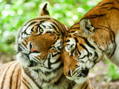 photo: (c) Ammit - fotolia.com