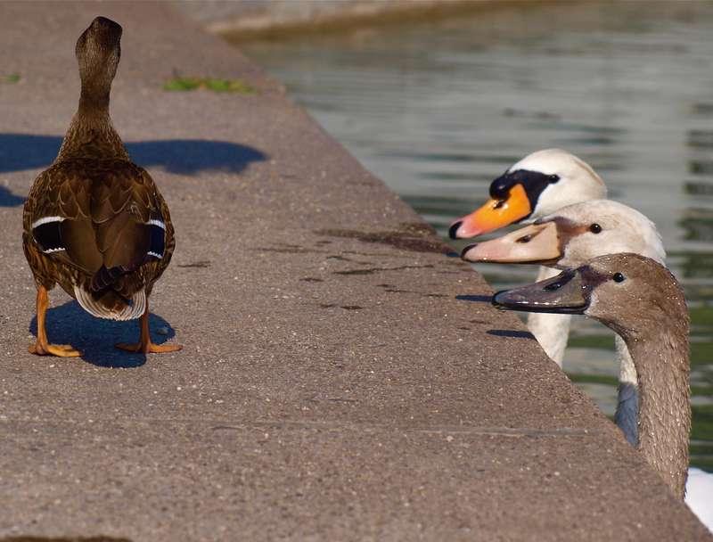 Liebe mag blind machen, aber Eifersucht sieht zuviel. (Jüdisches Sprichwort)  | Foto: © Phil Daub - Fotolia.com