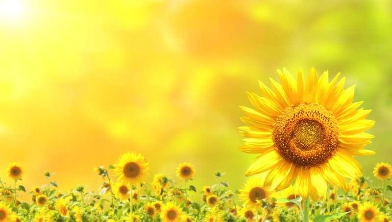 ©frenta - Fotolia.com