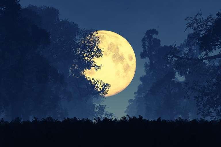 Mondkalender | Foto: (c) Fotolia / boscorelli